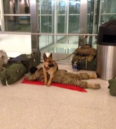 A military dog protecting her soldier. :)   #LoveWhatMatters  Photo courtesy of majorchamp via @reddit