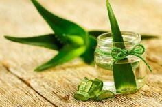 Aloe vera - Prečo ju Egypťania volali rastlina nesmrteľnosti?