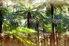 Native New Zealand Ponga or Punga Fern; Abstract Photos, Image Now, Ferns, New Zealand, Nativity, Royalty Free Stock Photos, Green, Plants, Life