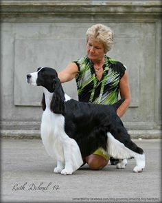 The Hottest Hairstyles for Your Dogs Grooming Shop, Pet Grooming, Creative Grooming, Hot Hair Styles, Springer Spaniel, Big Dogs, Puppies, Pets, Hairstyles