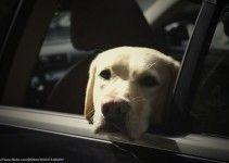 Consejos e información para viajar con el perro en el coche