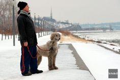 Même l'hiver, la promenade Samuel-De Champlain est fréquentée par des marcheurs qui n'ont pas peur du froid ni du vent, comme Bruno et son chien Louky. *** 2,6 millions de visites en 2013 à la promenade Samuel-De Champlain Samuel De Champlain, Bruno, 2013, Comme, Dog
