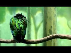 Abraham Hicks ~ Say This Every Day and You Will Get What You Want