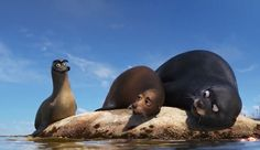 Gerald The Sea Lion is me all the time