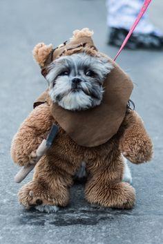 Ewok Dog Costume Photos