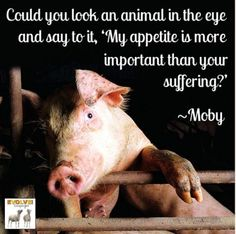 Unfortunately, a lot of people could do this easily. Stop suffering! #GoVegan