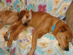 Another recent photo of Daisy (at left, who needs funding for the eye surgery). How her life has changed! http://circlel.org/news-2/please-donate-for-daisys-surgery/
