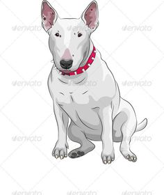 Vector cartoon Bull Terrier Dog breed sittong - Animals Characters