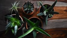 How to Safely Move Your Houseplants to Your New Place Benefits Of Indoor Plants, Best Indoor Plants, All Plants, Feng Shui Plants, Shower Plant, Mother Earth News, Plant Information, Close Up Photography, Snake Plant
