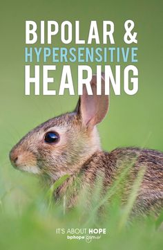 Hypersensitivity is a fairly common issue with bipolar disorder. Hearing every thing at once without the capacity of tuning out background noises. Makes focusing on tasks difficult or maintaining conversations with others near impossible.