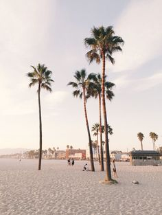 How to Take Good Beach Photos Fotos Do Instagram, Beach Aesthetic, To Infinity And Beyond, Beach Pictures, Summer Vibes, Palm Trees, San Diego, Places To Go, Beautiful Places