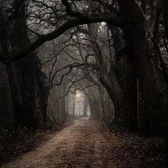 hollow path england | dark forest castle gothic Middle Ages | via Tumblr on We Heart It: The ...