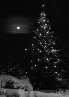Snow in tree and the moon