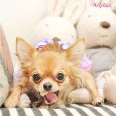 WOOFLINK - Hip designer dog clothes: GOOD DEAL ♥