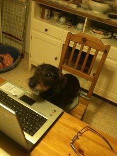 Al computer (Marina)