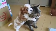 Love between cats and dogs Dog Cat, Cats, Animals, Gatos, Animales, Kitty Cats, Animaux, Animal Memes, Cat Breeds