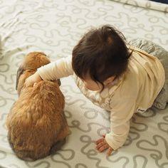 わしっと掴むよー むぎは全く動じずにんじんボリボリたべてる  今日は旦那が一カ月ぶりの帰国、娘はいっぱい遊んでもらって今やっと寝た ・ ・ ・ ・ ・  #赤ちゃん #ベビー #かわいい #肉 #女の子 #生後7ヶ月#0歳 #baby #babygirl #cute #育児 #子育て#babystagram #子供 #うさぎ #ロップイヤー #rabbit #rabbitstagram #bunny #ペット #bunbun #bun #pet #pets #petstagram #petsofinstagram #bunnies #bunnystagram #bunnylove #bunniesofinstagram