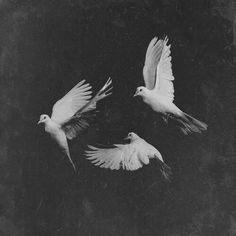 (Free as a bird) ..... How beautiful freedom by neverland | We Heart It