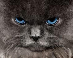 Stare-off!
