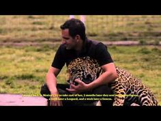 BLACK JAGUAR WHITE TIGER FOUNDATION VIDEO | Hotbook