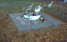 plan for installing a duck pool that drains downhill...uses a pond liner, PVC pipe, shower drain, and ball valve