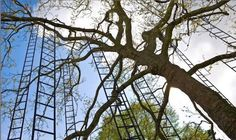 Superb Stairs on a Tree Francois Mechain