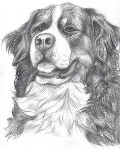 pes kreslený tužkou - Hledat Googlem
