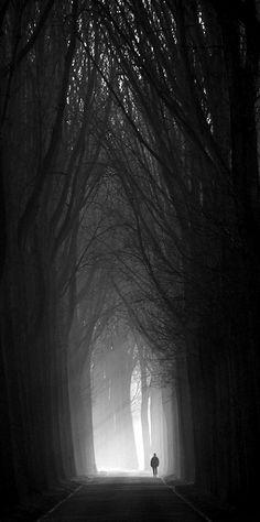 Sötét erdő, hangulatelem - inspiráció