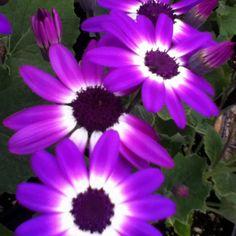Pretty purple flowers(: