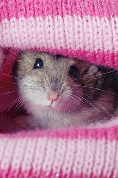Cutest hamster picture!!
