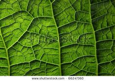 """BB """"Leaf Maze"""" : A peek at this microcosm inside a leaf gives one an awareness of nature at its finest, with rich blends of lush green."""