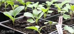 Tips for restarting your garden for fall