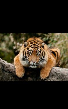 I spy with my tige eye.... food