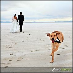 genius photography, seriously. Zuma Photo....