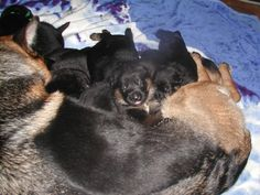 Pictures of Our Past Litters