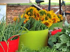 #Sunflowers - Union Street Farmers Market weekly in downtown Gainesville | CMC Apartments Blog