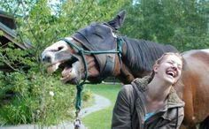 People laughinģ Animals And Pets, Funny Animals, Cute Animals, Funny Horses, Funny Dogs, Funny Humor, Cats Humor, Funny Kitties, Adorable Kittens