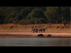 Robin Pope Safaris --Luangwa Bush Camping -- Specialist Safari -- Classic Safari Camps of Africa Member Camps, Lodges, Robin, Safari, Africa, Videos, Classic, Campsis, Cottages