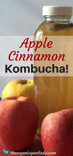Do you make your own Kombucha? Are you always on the look out for delicious new Kombucha flavors? This Mango Kombucha Recipe is going to be your new favorite! Jun Kombucha, Kombucha Flavors, How To Brew Kombucha, Kombucha Recipe, Probiotic Drinks, Kombucha Probiotic, Making Kombucha, Kombucha Brewing, Alcoholic Drinks