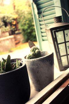 promesse de floraison...sur ma fenêtre