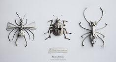 Bug Bones - Graphis