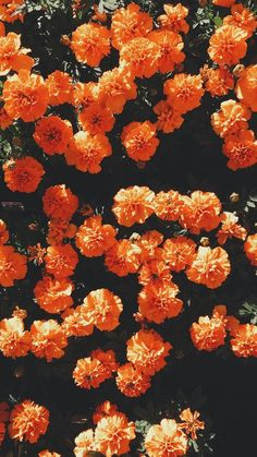 Find images and videos about flowers, wallpaper and orange on We Heart It - the app to get lost in what you love.