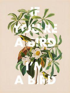 visualgraphc:  I'm a Bird.