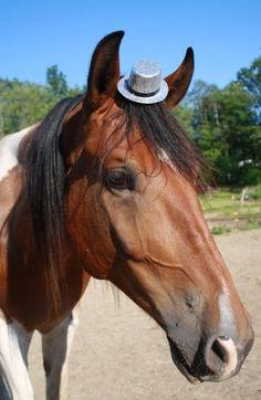 animales_sombrero15