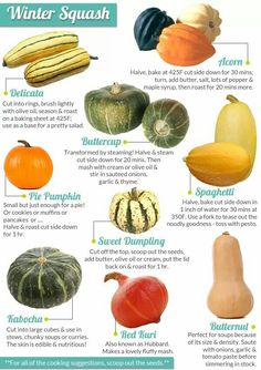 Types of Winter Squash