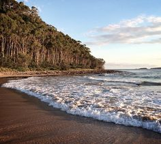 For the best beach camping in New South Wales, Australia, we often went to Murramarang National Park. Photo: Wallace68