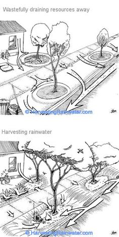 Street Orchards for Community Security - Clever ideas on harvesting rainwater (Street orchards, rain gardens & curbcuts) by Brad Lancaster - Rain Garden, Dream Garden, Rainwater Cistern, Water From Air, Permaculture Design, Water Collection, Rainwater Harvesting, Water Conservation, Plantation