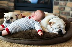 Bulldogs and Babies | BaggyBulldogs