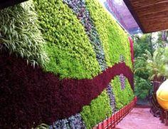 """Jardines verticales y muros verdes con tecnología modular """"hagalo usted mismo"""" en México"""