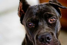 SamanthaHolmesPhotography | Pets